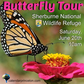 butterfly tour